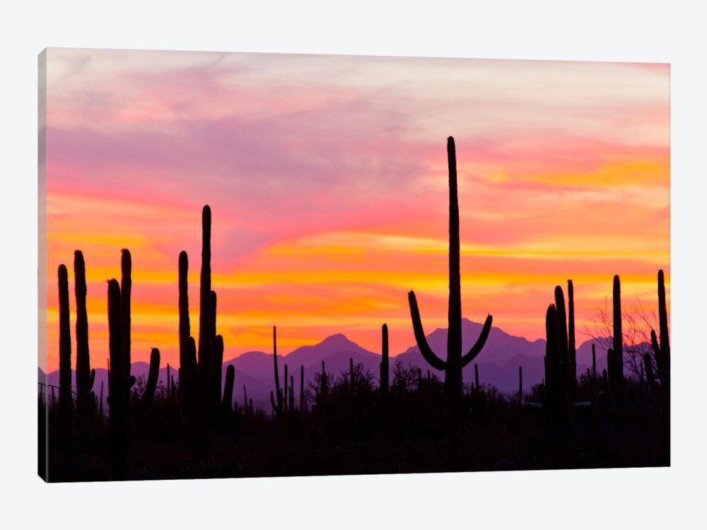Saguaro Cacti At Sunset I, Saguaro Natio | Cathy & Gordon Illg Regarding Arizona Canvas Wall Art (Image 18 of 20)