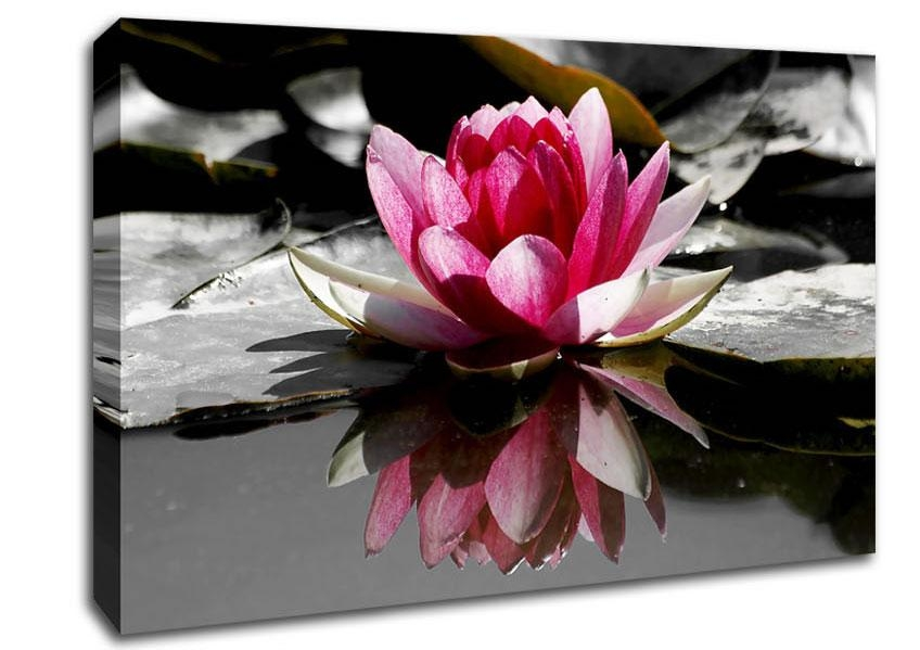 Wall Art Designs: Pink Wall Art Pink Water Lily Reflections Home Pertaining To Pink Canvas Wall Art (Image 15 of 20)