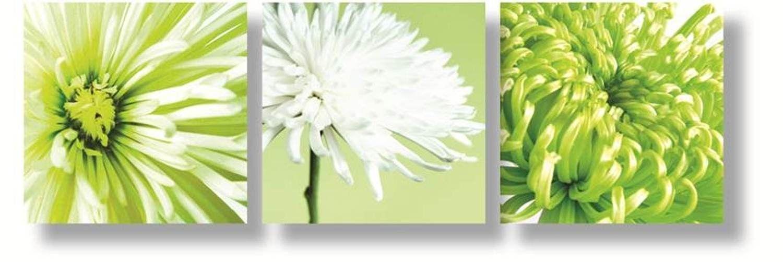 Canvas Art Green New Wall Art Green – Wall Decoration Ideas Inside Green Wall Art (Image 3 of 10)