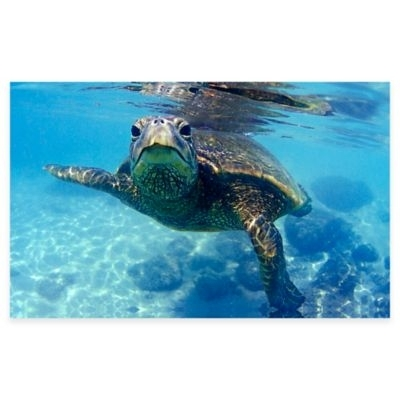 Friendly Turtle Canvas Wall Art Multi | Products With Sea Turtle Canvas Wall Art (Image 4 of 10)