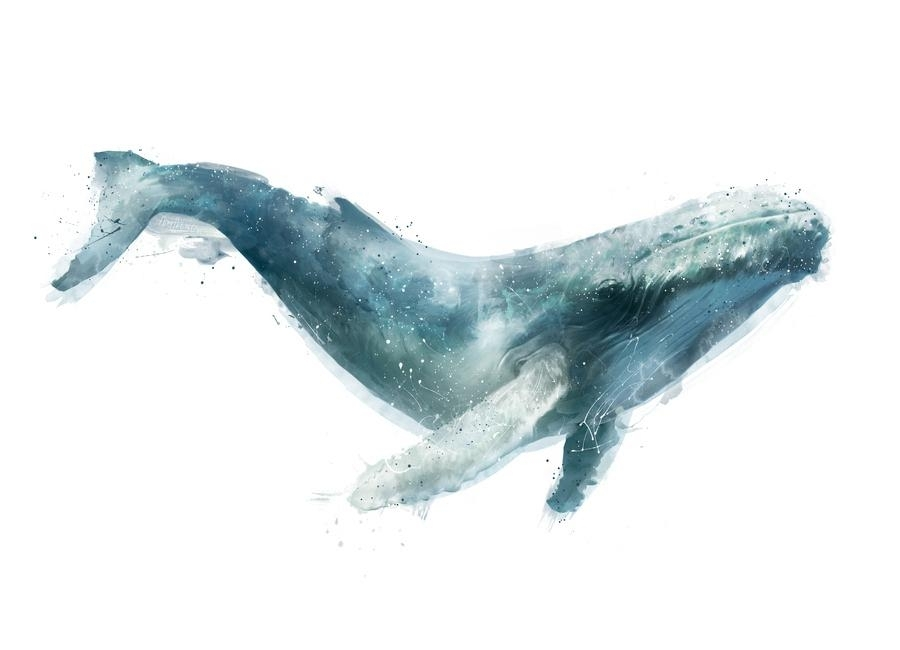 Humpback Whale As Canvas Printamy Hamilton | Juniqe With Whale Canvas Wall Art (Photo 4 of 10)