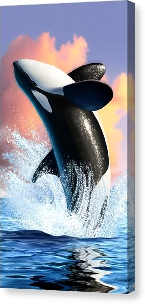Killer Whale Canvas Prints | Fine Art America Pertaining To Whale Canvas Wall Art (Image 5 of 10)