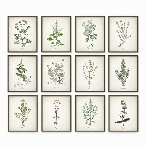 Kitchen Herbs Wall Art Print Set Of 12 – Vintage Botanical Herb With Regard To Herb Wall Art (Image 5 of 10)