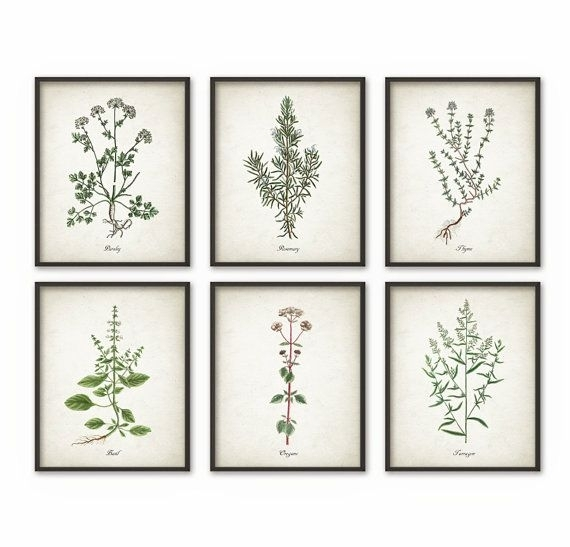 Kitchen Herbs Wall Art Print Set Of 6 – Vintage Botanical Herb Regarding Herb Wall Art (View 8 of 10)