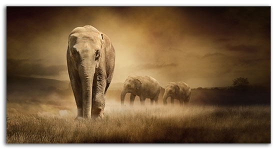 Large Elephants Sepia Wall Art 103 X 52 Cm Canvas Wall Art Picture Within Elephant Canvas Wall Art (Image 5 of 10)