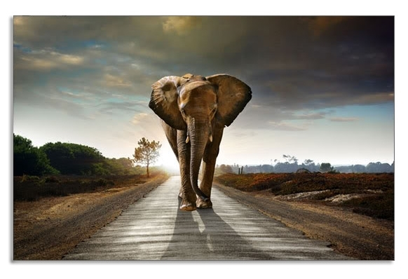 Long Road Home Elephant Canvas Wall Art Picture 34 X 20 Inch Print Intended For Elephant Canvas Wall Art (Image 6 of 10)