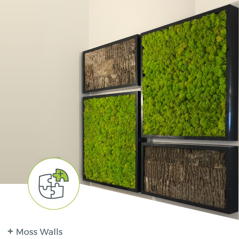 Option: Moss Wall – Natura – Enhancing The Built Environment Pertaining To Moss Wall Art (Image 9 of 10)