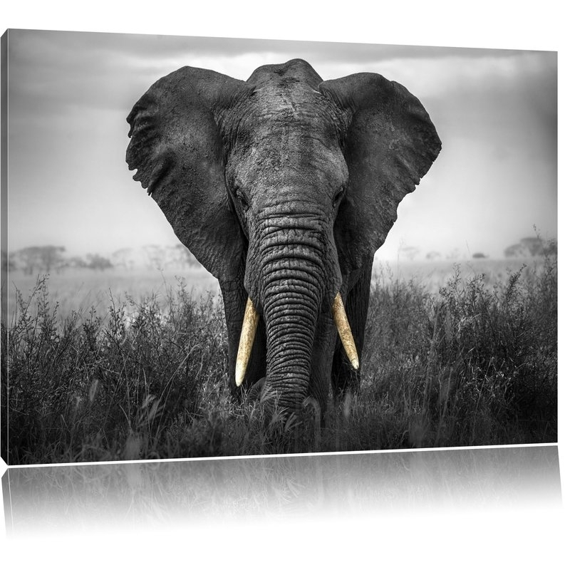 Pixxprint Graceful Elephant Wall Art On Canvas | Wayfair.co (View 9 of 10)