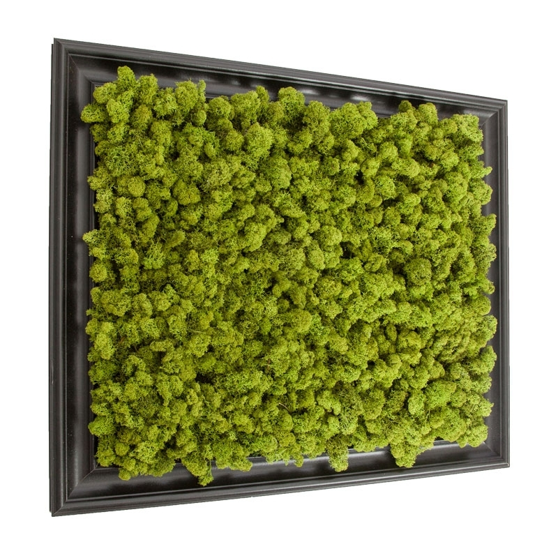 Preserved Lichen Moss Wall Art In Frame 20In. X 24In (Image 10 of 10)