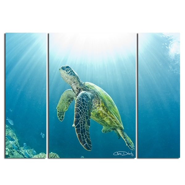Shop Christopher Doherty 'sea Turtle' Canvas Wall Art (3 Piece Intended For Sea Turtle Canvas Wall Art (Image 8 of 10)