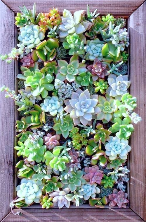 Succulent Wall Art 14 | For My Mama ❤ | Pinterest | Succulent Wall Pertaining To Succulent Wall Art (Image 7 of 10)