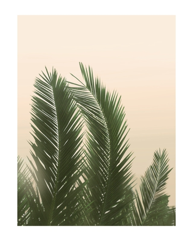 Tropical Palm Tree Wall Art Printswilder California | Minted Inside Palm Tree Wall Art (Photo 1 of 10)