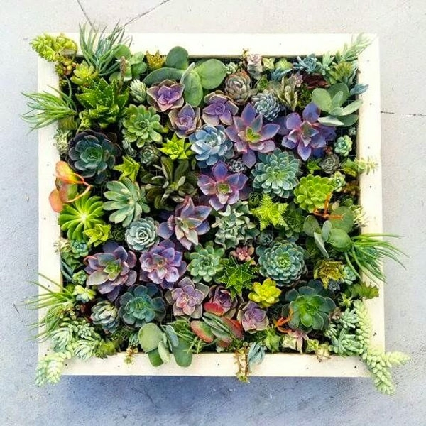 Vertical Succulent Wall Planter In Quick Easy Steps Diy Succulent With Succulent Wall Art (Photo 1 of 10)