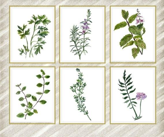 Watercolor Herbs Print: Herb Wall Art Kitchen Wall | Etsy Regarding Herb Wall Art (View 6 of 10)