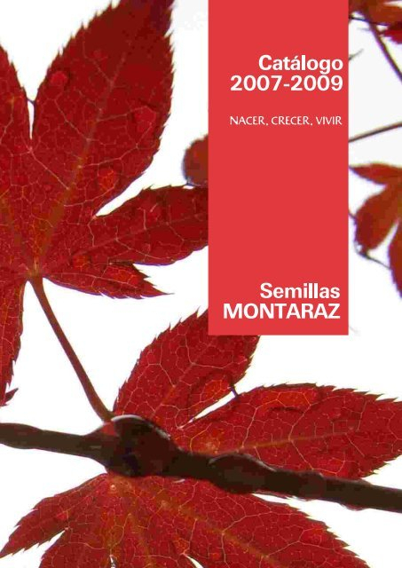 Material Forestal De Reproducción – Semillas Montaraz Inside Gattilier 3 Light Cluster Pendants (View 20 of 25)
