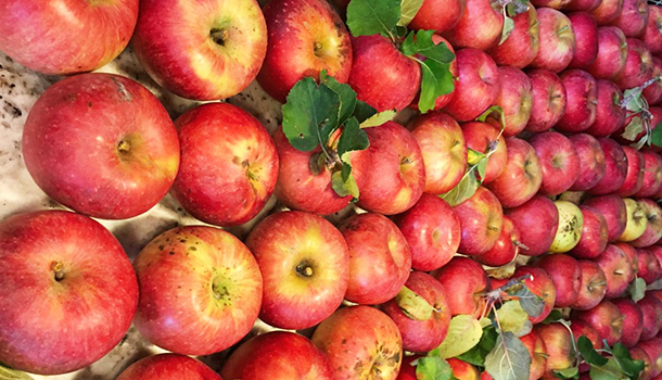 Apple Picking In America: 19 Best You Pick Orchards Within Apple Orchard Printed Kitchen Tier Sets (View 20 of 25)