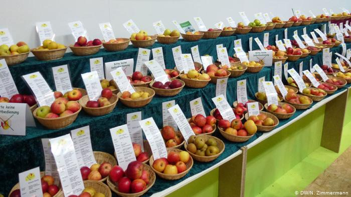 Can Germany′s Heirloom Apple Varieties Be Saved Pertaining To Apple Orchard Printed Kitchen Tier Sets (View 14 of 25)