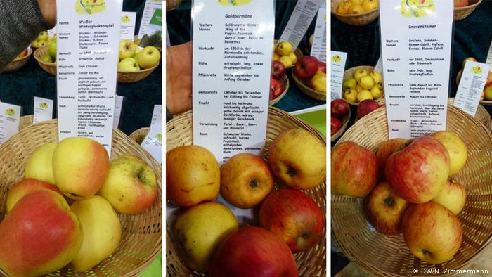 Can Germany′s Heirloom Apple Varieties Be Saved With Apple Orchard Printed Kitchen Tier Sets (View 17 of 25)