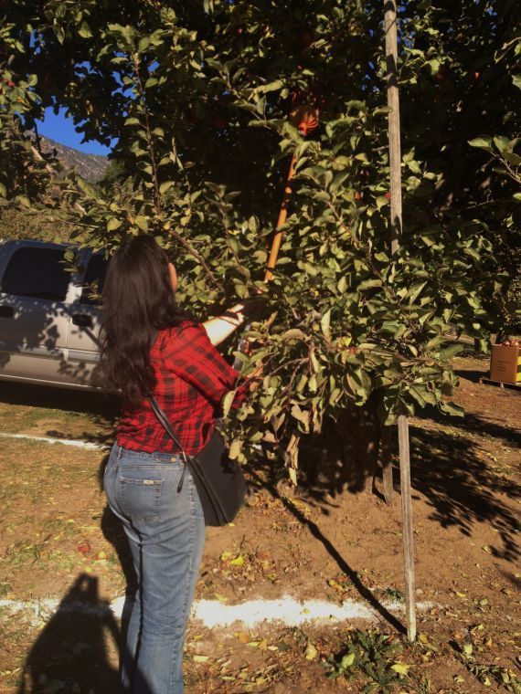 Top 5 Apple Picking Spots For Richmonders | Local Interest In Apple Orchard Printed Kitchen Tier Sets (View 18 of 25)