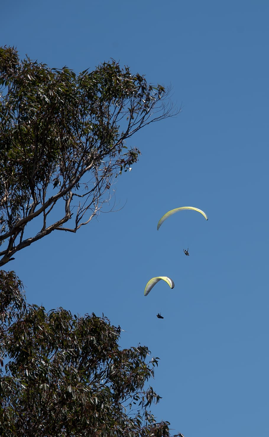 Para Gliders, Glider, Two, Flying, Sport, Adventure, Tree With Regard To Dual Rider Glider Swings With Soft Touch Rope (View 18 of 25)