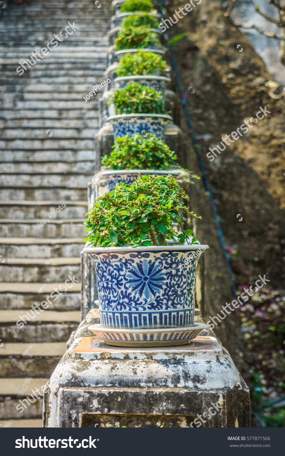Carmona Retusa Plants Old Ceramic Pots Stock Photo (Edit Now With Carmon Ceramic Garden Tool (View 6 of 25)