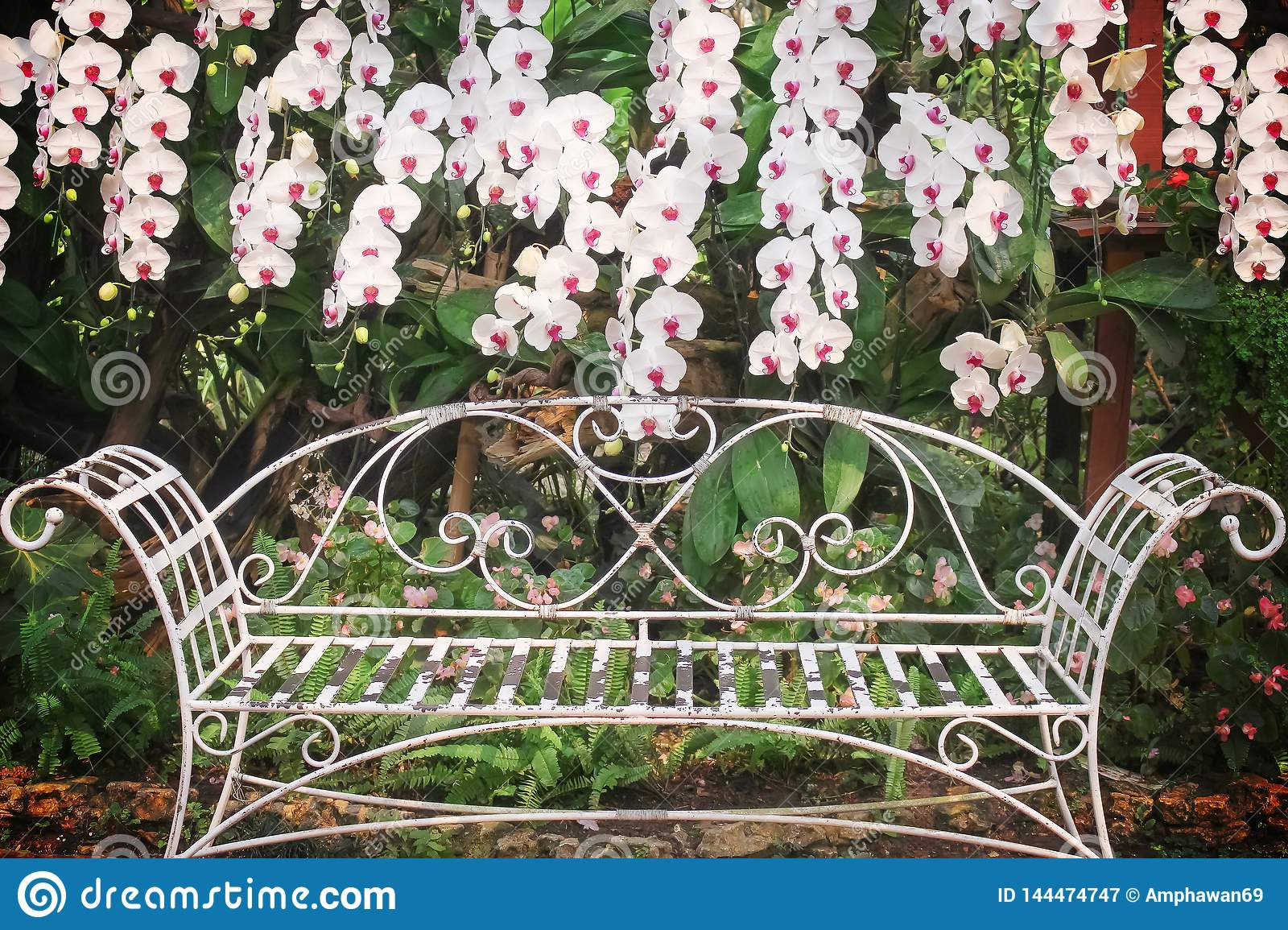 Colorful White Orchids Blooming And Old White Steel Bench In Regarding Blooming Iron Garden Benches (View 24 of 25)