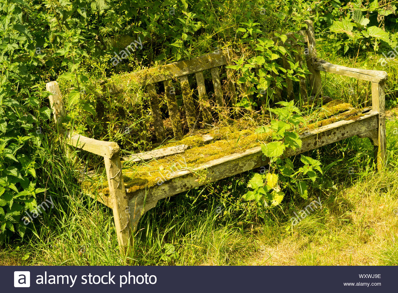 Old Overgrown Garden Bench,Uk Stock Photo – Alamy Intended For Weir Garden Stools (View 24 of 25)
