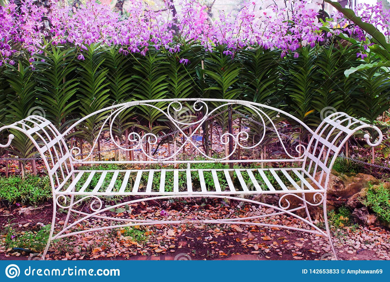Old White Iron Bench In Garden With Colorful Flowers Purple For Blooming Iron Garden Benches (View 5 of 25)