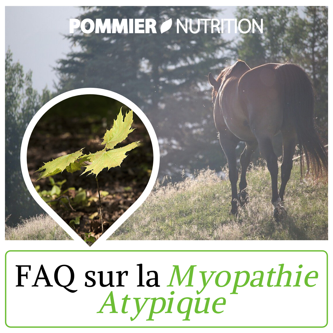 Pommier Nutrition | Atypical Myopathy In 5 Questions Throughout Tufan Cement Garden Stools (View 18 of 25)