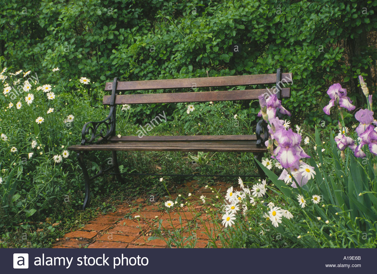 Wooden And Iron Garden Bench Sits In Secluded Corner Of Throughout Blooming Iron Garden Benches (View 6 of 25)