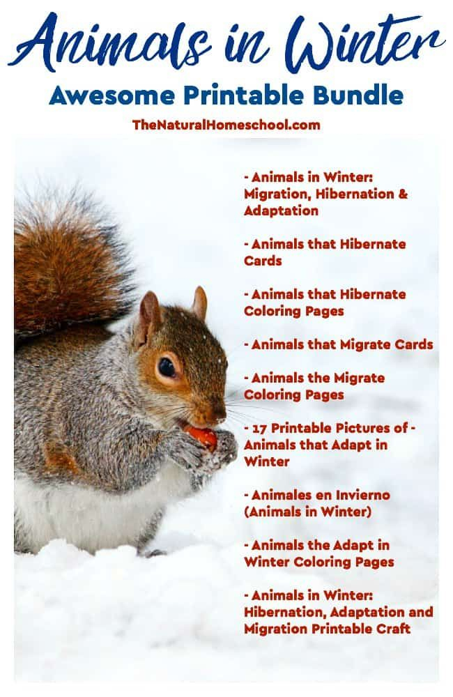 Animals In Winter: Hibernation, Adaptation And Migration Within Recent Thorson (View 2 of 4)