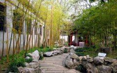 Chinese Bamboo Garden