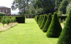 Garden Hedge Ideas