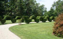 Garden Hedges Ideas