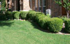 Home Garden Hedges Ideas