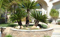 Plants For Minimalist Garden