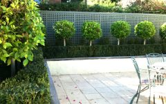 Simple Minimalist Garden Hedges Ideas