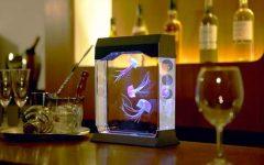 Small Aquarium Ideas