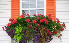Basket Plants for Garden