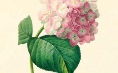 Botanical Prints Etsy